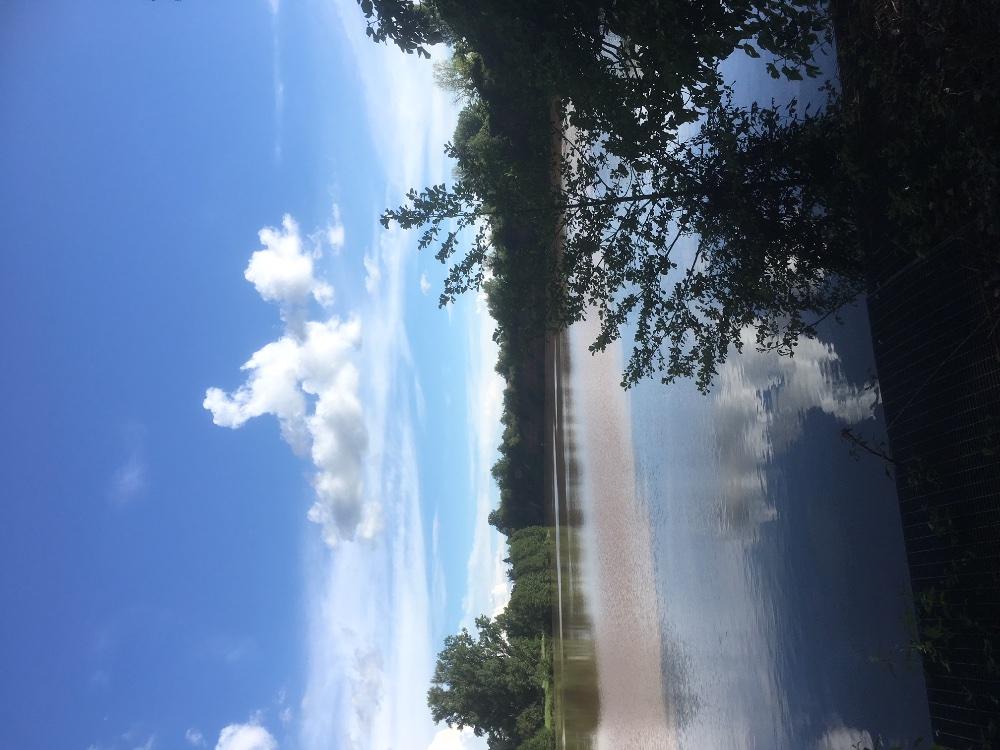 Aire camping-car à Castelnau-de-Lévis (81150) - Photo 10